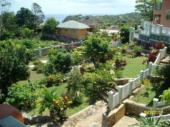 Pimento Lodge Resort : grounds