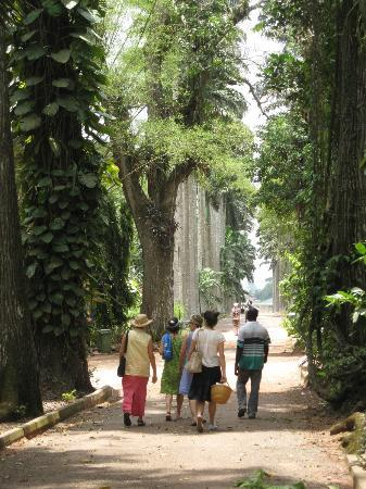 Aburi Botanical Gardens : Walking through the gardens