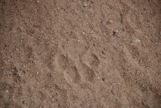 Umlani Bushcamp: track