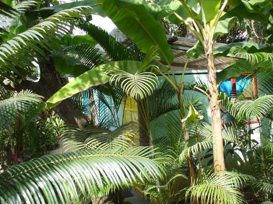 Paraiso Yoga : Bungalow en el jardín