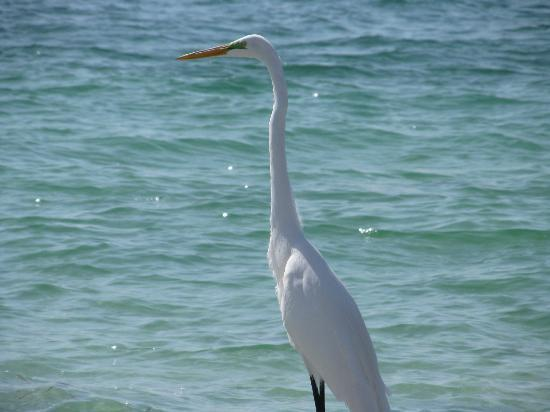Periwinkle Cottages of Sanibel: Birds everywhere.