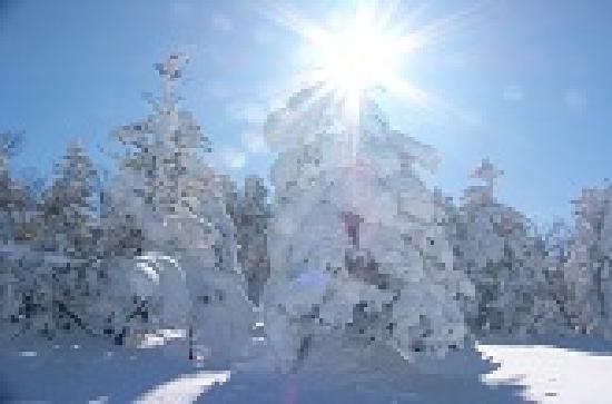 Davos Hill Resort: 冬はスキー!