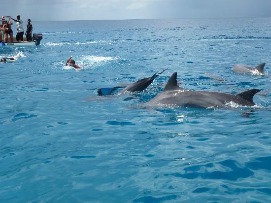 DoubleTree by Hilton Resort Zanzibar - Nungwi: Delfintour