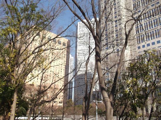 Shinjuku Chuo Park : 新宿中央公園の写真その2
