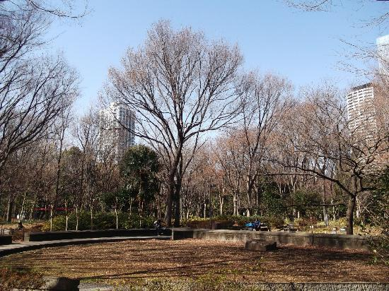 Shinjuku Chuo Park : 新宿中央公園の写真その1