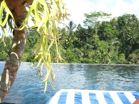 Piscine A Debordement Sur La Jungle Picture Of Alam Ubud Villa