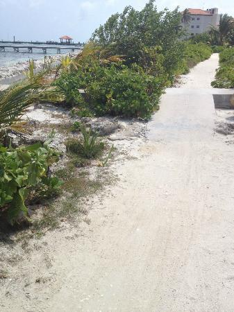 Grand Caribe Belize Resort and Condominiums: Find the Iguana