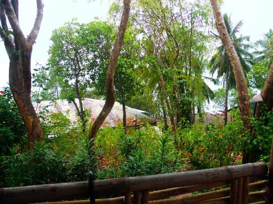 Discovery Island Resort and Dive Center : View from our Native Cottage Balcony