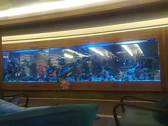 Huge fish tanks picture of gloria serenity resort for Huge fish tank