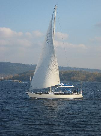 Batservice Sightseeing: Passing yacht on fjord