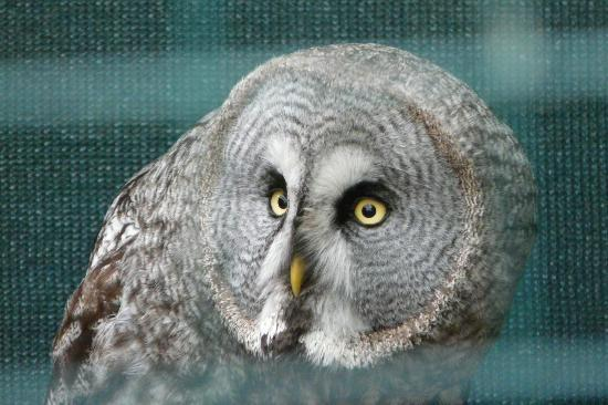 Exmoor Owl & Hawk Centre: Close encounter with an owl