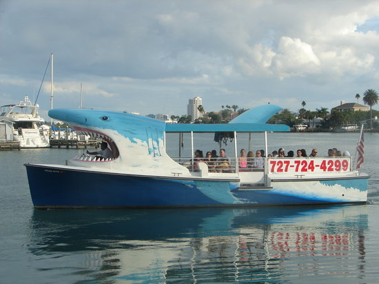 Dolphin Watching Tours Clearwater