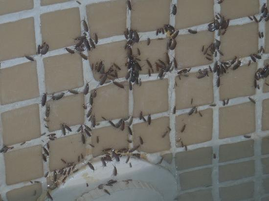 Sanctuary Cap Cana by AlSol: Bugs from jacuzzi