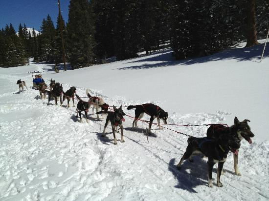 Monarch Dog Sled Rides: Taking a CoolDown Break on the Trail