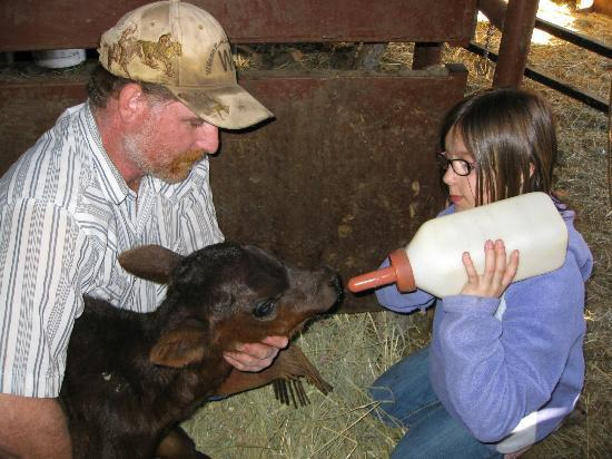 Wilson Ranches Retreat Bed & Breakfast: Feeding a dogie (orphan) calf.