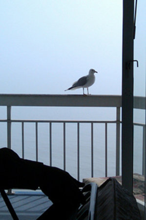Waters Edge Resort:                                     Love when the birds visit!