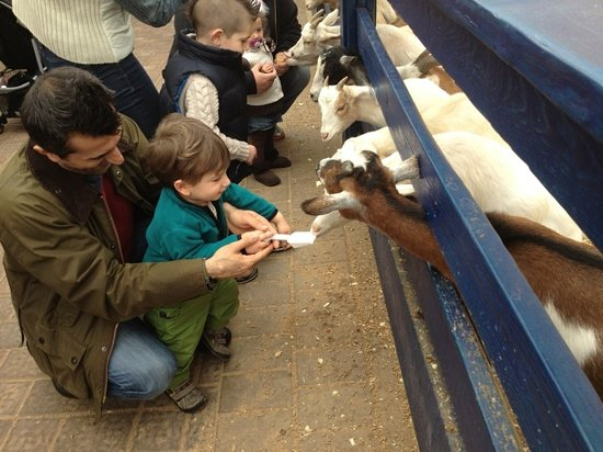 Melville, NY: our little boy feeding the goats