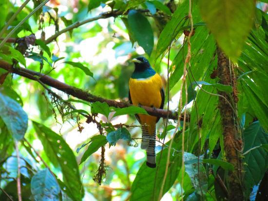 Surcos Tours: Beautiful Bird