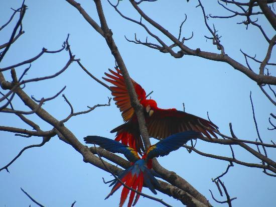 Surcos Tours: Macaws