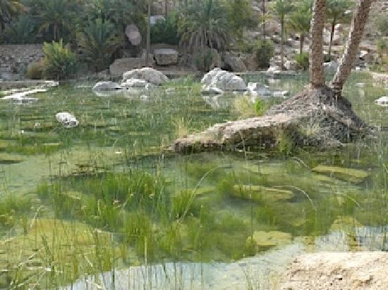 Ash-Sharqiyah Governorate 사진