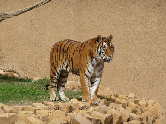 Riyadh Zoo: Perhaps the most beautiful sight at the zoo