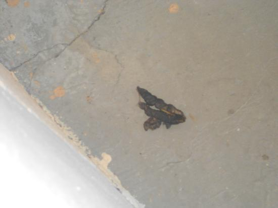 Hotel Ferienwelt Kristall: feces