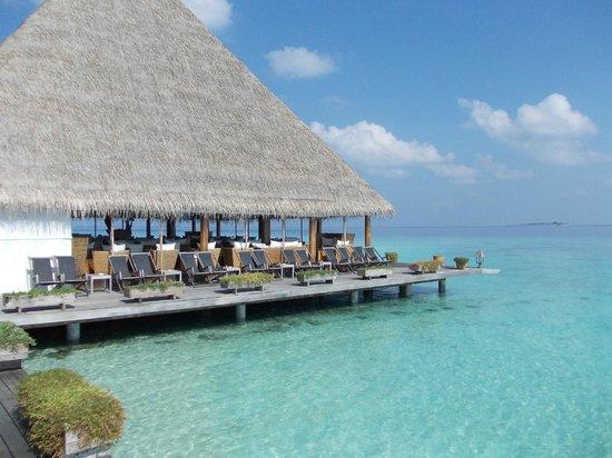 Gangehi Island Resort: bar
