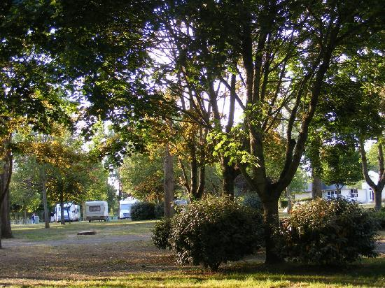 Camping de l'Ile d'Or: General view of campsite