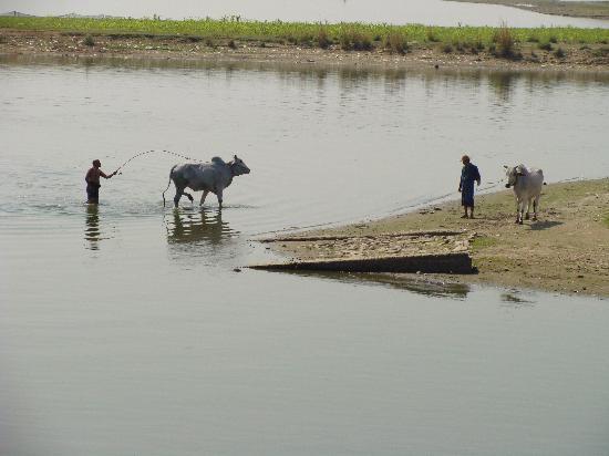 Most U Bein: Escenas agricolas desde el Puente