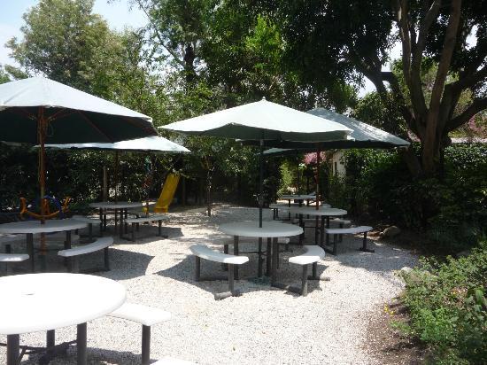 Vivero y Café de la Escalonia (tienda de conveniencia): MESAS AL AIRE LIBRE Y JUEGOS PARA NIÑOS