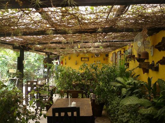 Naturaleza viva a disfrutar el cafe de la escalonia for Vivero de cafe pdf