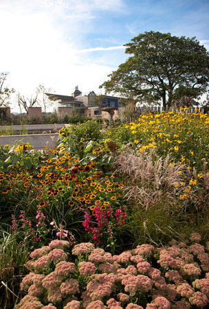 RSPB Saltholme: Saltholme's wildlife garden in full bloom
