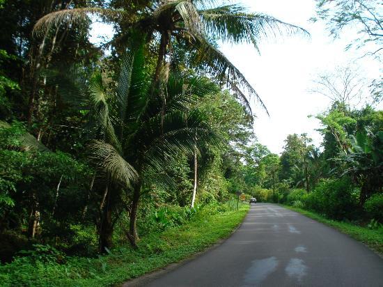 Casa Faya Lobi: road