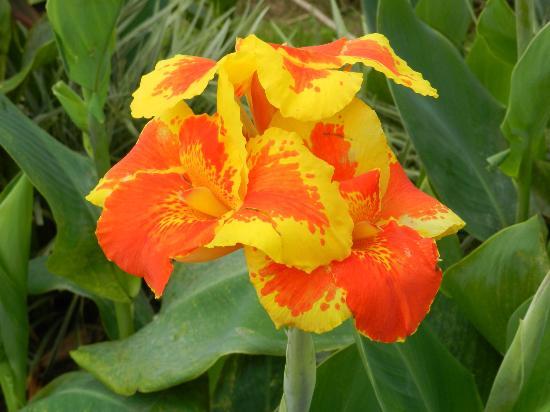 Hotel Riu Guanacaste Most Beautiful Flower Ever