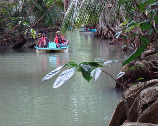 Mangrove Bay Tours: Mangrove Bay river tours