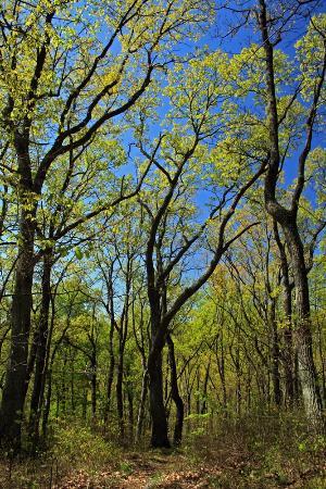 Scioto Trail State Park: Scioto Trail State Forest