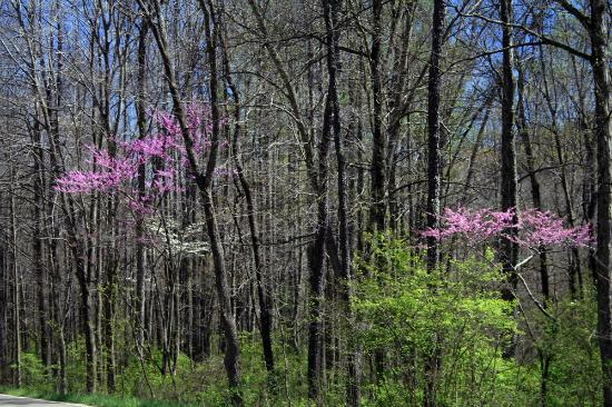Scioto Trail State Park: Spring Blooms