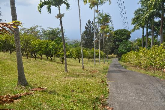 Aloha Guest House: the driveway
