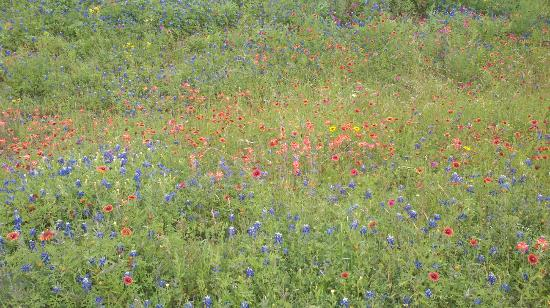 Hempstead Country Inn & Suites: Wildflower Season