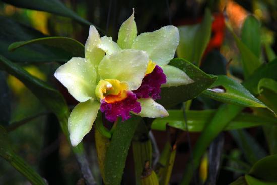 بالميرا بيتش ريزورت آند سبا: Орхидеи
