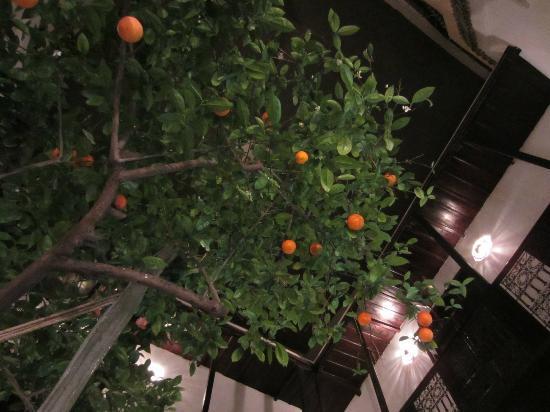 Dar Charkia: Orange tree in the courtyard
