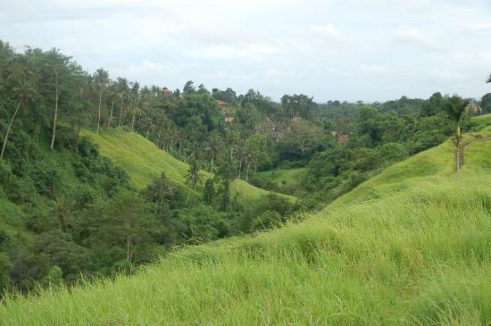 Klub Kokos: View from Campuan Ridge