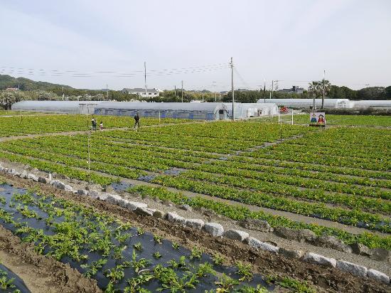 Tateyama Family Park : ポピー畑