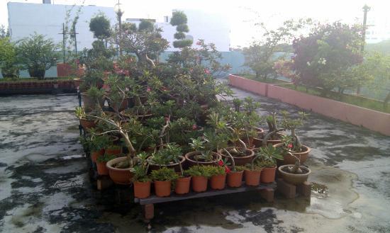 Hotel Mingood: Rooftop garden.