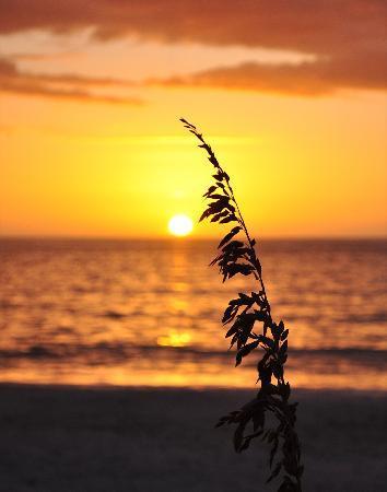 Barefoot Beach Preserve : Sun and sea oat