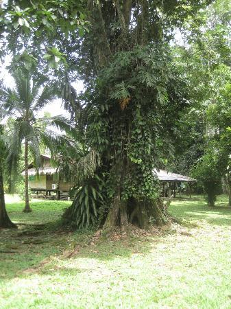 Casitas de Punta Uva: ...