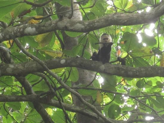Casitas de Punta Uva: A squirrel monkey