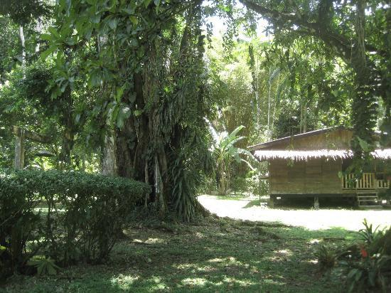 Casitas de Punta Uva: The lush jungle, surrounding the casitas