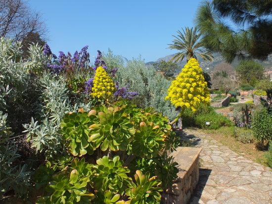 Jardín Botánico de Soller: Great plants - and so peaceful