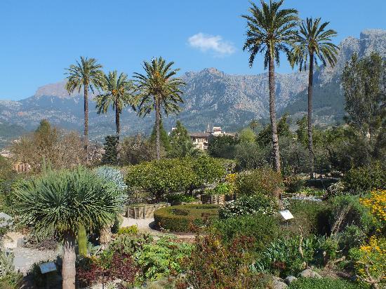Jardín Botánico de Soller: Good views